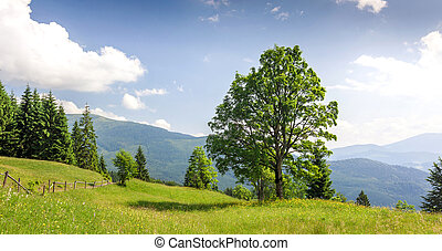 Big green tree standing on grass meadow in mountains