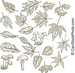 Set of hand drawn leaves, berries and mushrooms, vector...