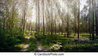Forest. Ecology summer green