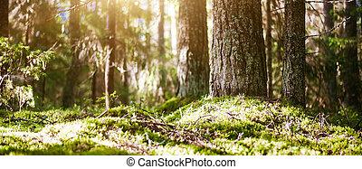 Forest bokeh blur sun light. Summer morning