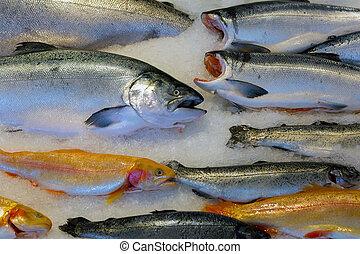 fish, lax, marknaden, is, våt