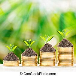pesos, Crecimiento, árbol