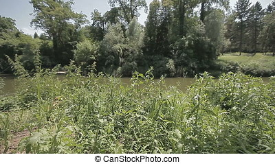 Wild Landscape of Pond Bank - Wild lanscape of pond bank....