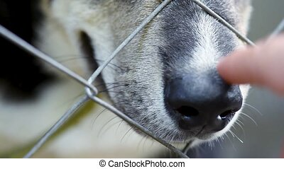 Dog in cage at animal shelter - Close up of man hand playing...