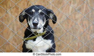 Dog in cage at animal shelter - Sad dog in his cage at...