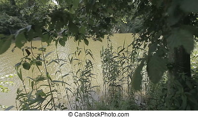 Reed and Tree Leaves on Pond Bank - Reed and tree leaves on...