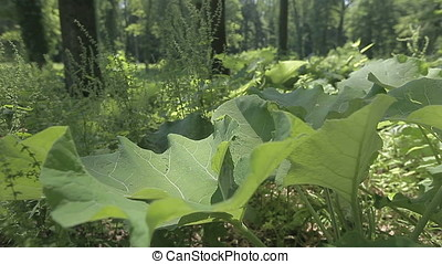 Huge Leaves Foreground - Huge leaves foreground shot against...