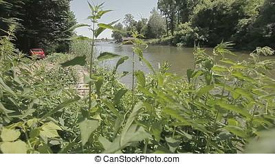 Hemp on Bank to Pond Horizontal Pan - Hemp growing on pond...