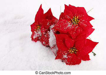 Christmas red poinsettias background over snowflake...