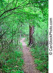 Narrow Path Through Forest - A dirt trail through a lush...