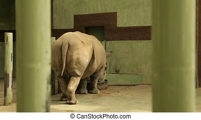Rhinoceros takes food