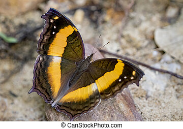 Image of a butterfly on nature background. Insect Animal...