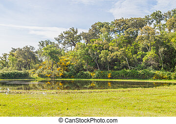 Forest and lake in Vale Seco, Santiago do Cacem, Alentejo,...