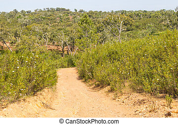 Trail with Cork tree forest and Esteva flowers in Vale Seco,...