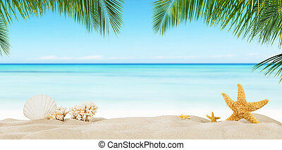 Tropical beach with sea star on sand, summer holiday background.