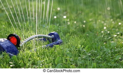 Lawn sprinkler system on garden in grass. Sprinkle sprays...