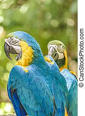 Ecuadorian Parrots at Zoo, Guayaquil, Ecuador - Close up...