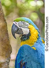 Ecuadorian Parrot at Zoo, Guayaquil, Ecuador - Close up shot...