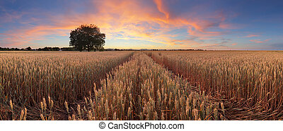 Red sunset over wheat field panorama with tree and way