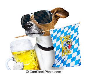 bavarian beer dog festival - jack russell dog celebrating...