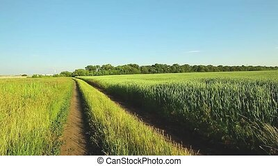 Summer landscape with country road and field of Soy, Corn...