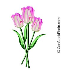 Tulip flowers bouquet with waterdrops. Spring summer festive...