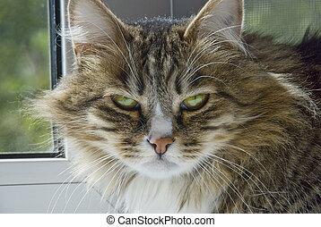severe cat looks bleak