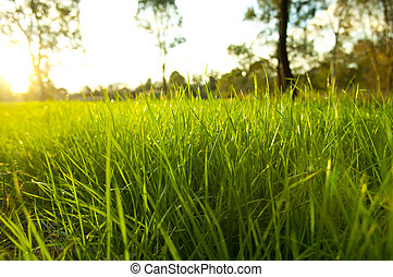 Lush Grass - Getting eye level on lush green grass with the...