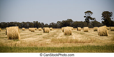 Hay Bales - Harvest time nearly finished, hay bales sit in...