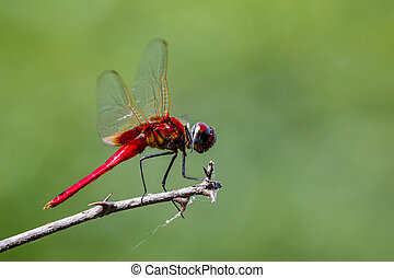 Image of a dragonfly on nature background. Insect Animal