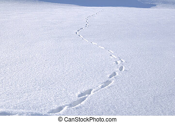 Animal Tracks in the Snow - Animal Tracks in Snow Covered...