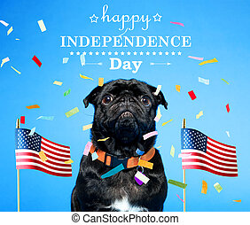 Black pug on the fourth of July - Black pug with an American...