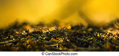 Close-up of ants carrying a beetle on top of the formicary in the woods