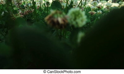 close up of camera moves through a field of flowers