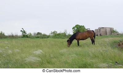 Lonely Beautiful brown horse in the green meadow - Lonely...