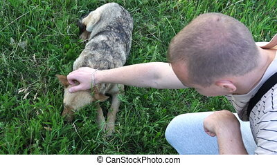 young man stroking a stray dog and plays with it