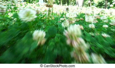 camera moves through a field of flowers