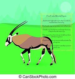 African Oryx Gazella or Gemsbok