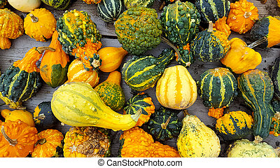 autumn gourds collection - colorful autumn gourds collection