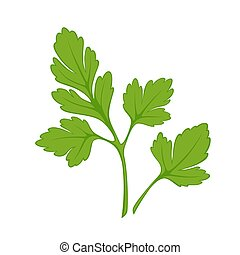 Fresh green parsley isolated on white close up vector...
