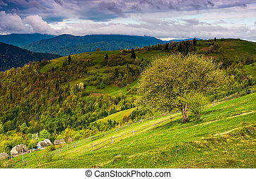 tree and fence on rural meadow in mountains. Carpathian...