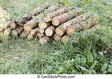Round pine wood logs - piled up Wood supplier Storage of...