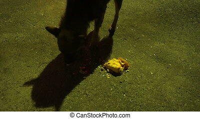 a stray homeless dog eats Shawarma