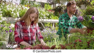 Cheerful coworkers with plants - Cheerful man and woman...