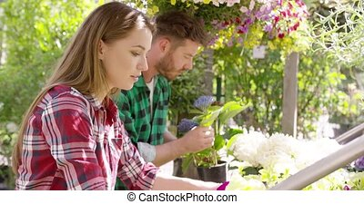 People working with flowers - Young professional male and...