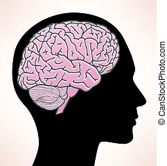Illustration of human brain - Vector profile view of a human...