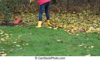 female rake dry autumnal leaves with rake in own garden. 4K...