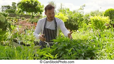 Wale gardener working with plants - Handsome young man doing...