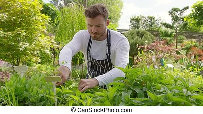 Male gardener trimming plants - Horizontal outdoors shot of...