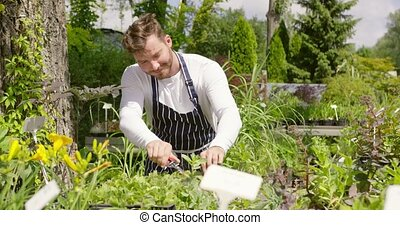 Man cutting plants - Horizontal outdoors shot of...